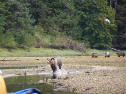 Bear photo 2-2