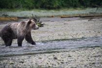 bear photo1